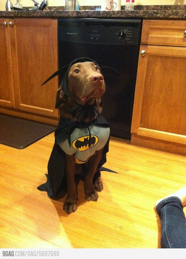 Halloween Costumes For Dogs 2017