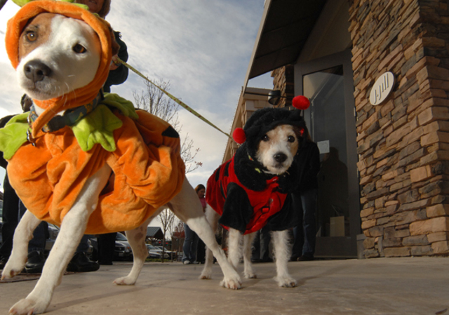 jack russell costumes halloween