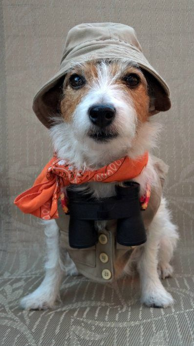 travel jack russell costume