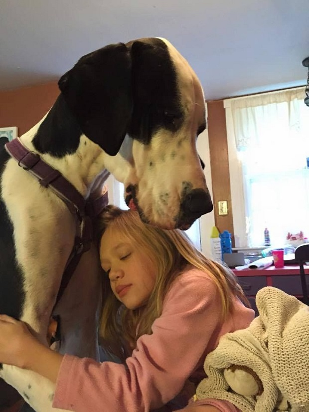great dane hug girl love
