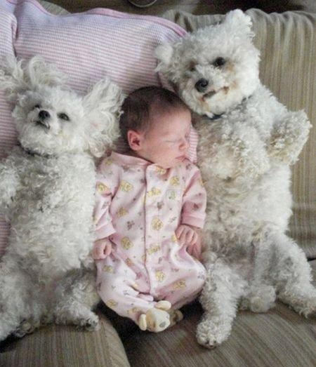 Bichon and child