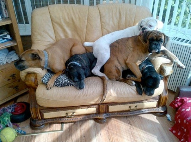 Hasil gambar untuk dogs on couch