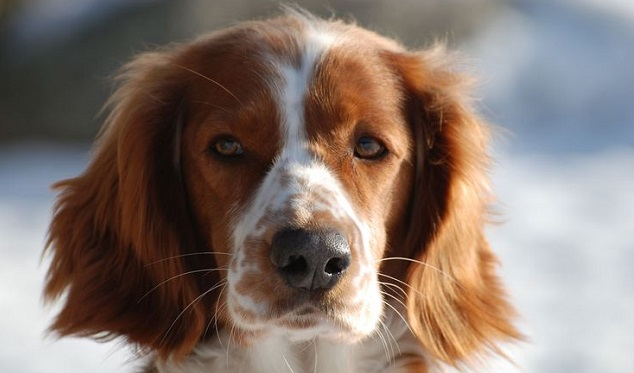 Dog Breeds With Freckles