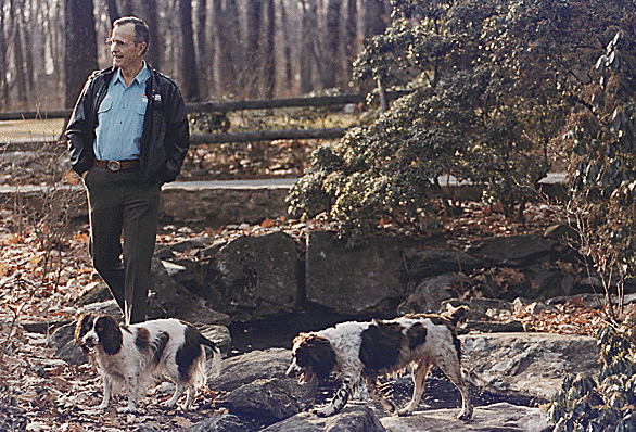 George Bush and his dogs taking a stroll
