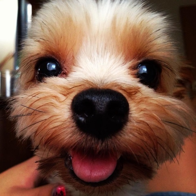 cute smiling face dog