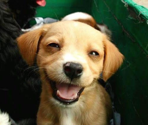 funny pup smiling adorably