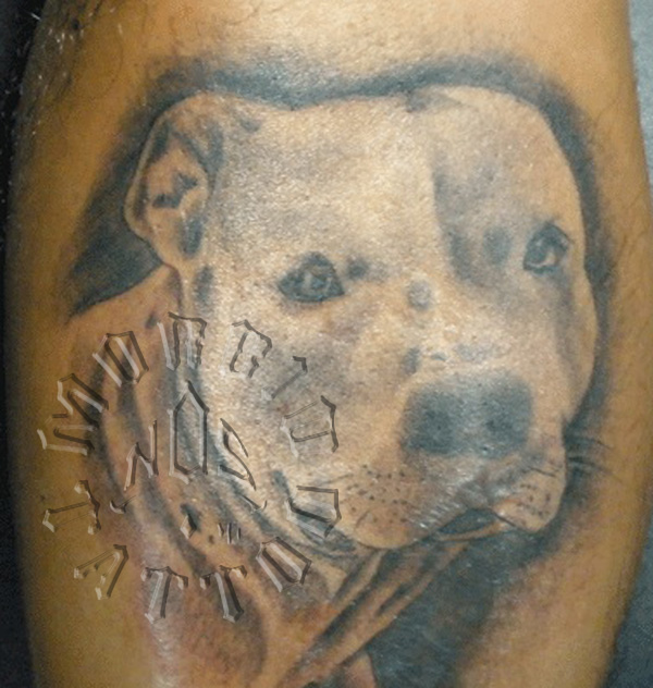 The 12 Coolest Staffordshire Bull Terrier Tattoo Designs