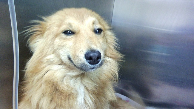 positive smiling dog pics face