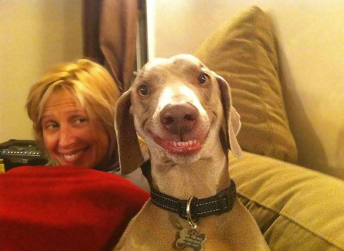 wippet dog smiling woman