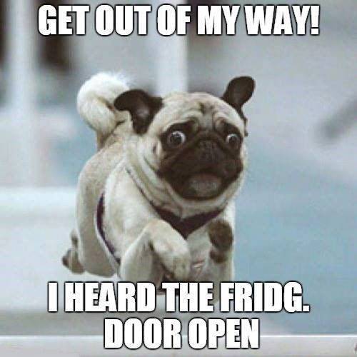 Funny Meme Pictures Of Dogs : Best pug memes of all time