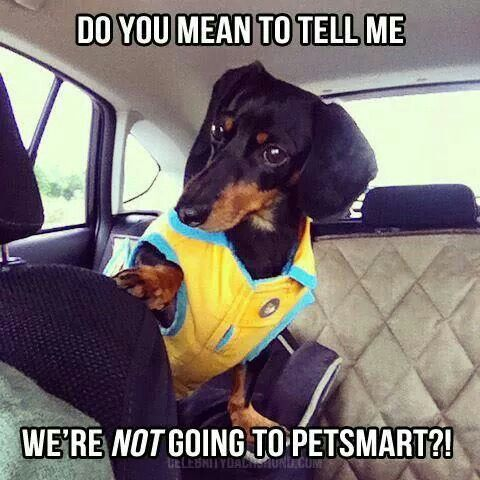 12 best dachshund memes of all time