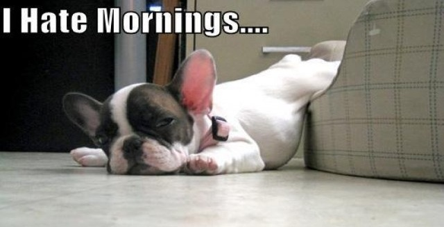 Cute Good Morning In French : Best french bulldog memes of all time