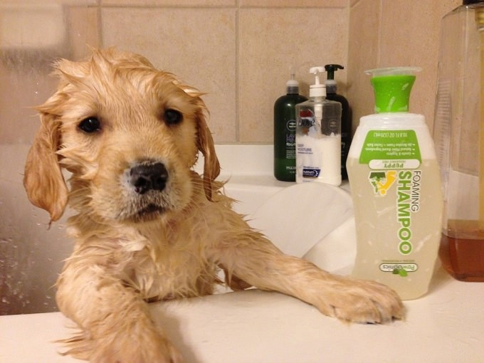 How To Get Your Dog To Like Baths