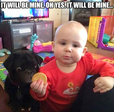 hungry pug and baby