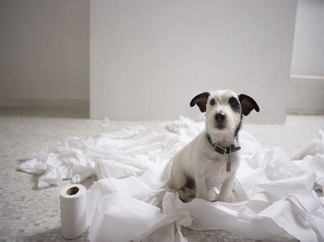 puppy toilet paper mess