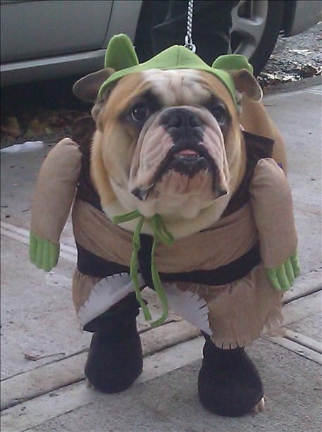 english-bulldog-halloween-shrek
