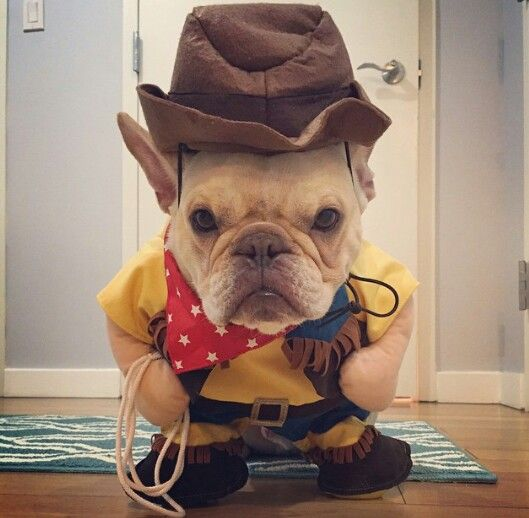 french-bulldog-woody-toy-story-for-halloween