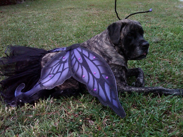ladas-adorable-butterfly-costume