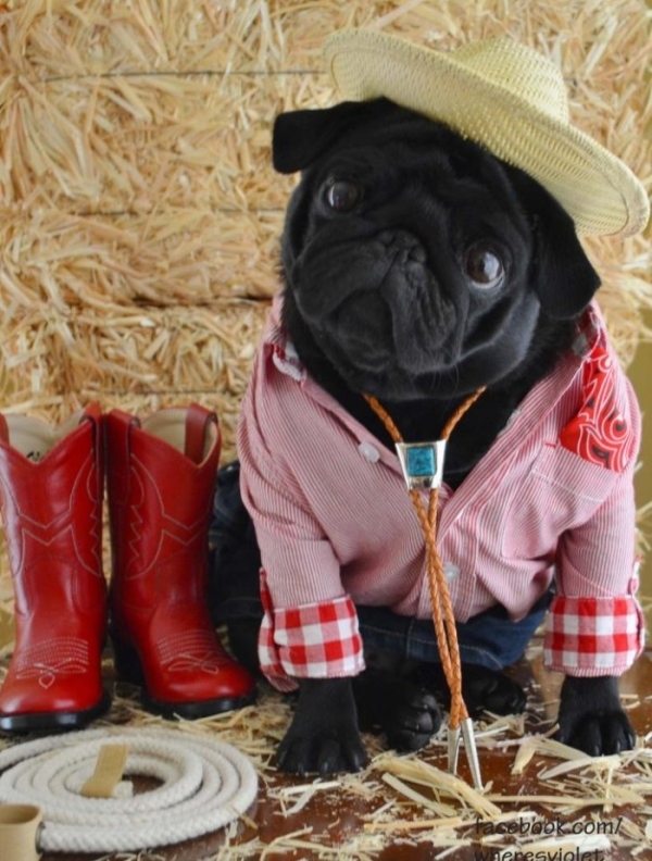 cute-pug-clothes