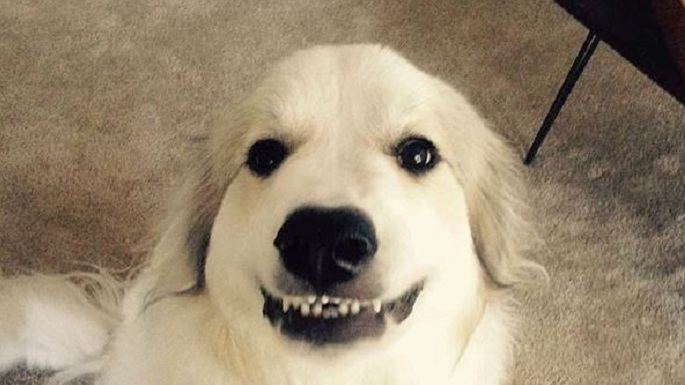 """10 Dogs Who Just Want To Say """"Good Morning! I Love You!"""""""