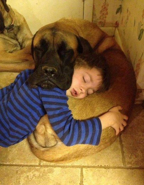 dog-and-kid