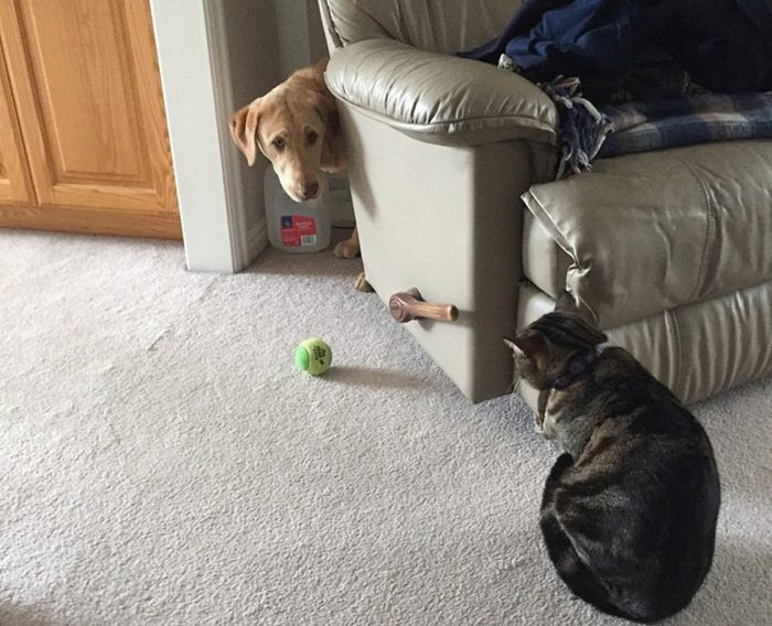 dog-ball-and-cat