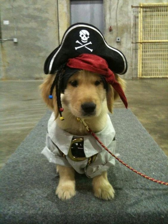 golden-dressed-like-a-pirate