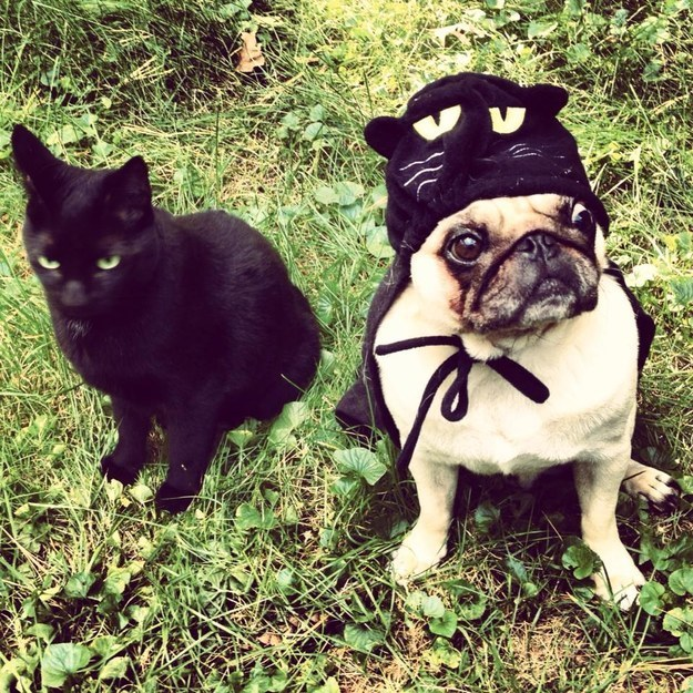pug-dog-cat-costumes
