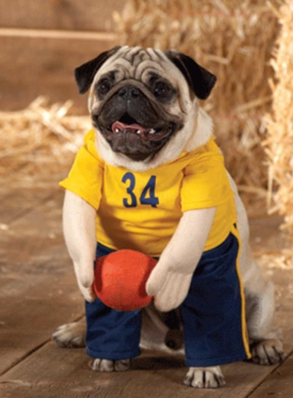 pug-dog-stylish-costume