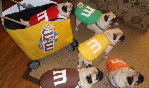 24 pug halloween costumes that are so cute we cant even - Pugs Halloween
