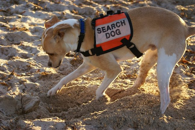 search-dog