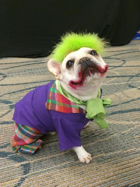 Dogs In Costumes Videos