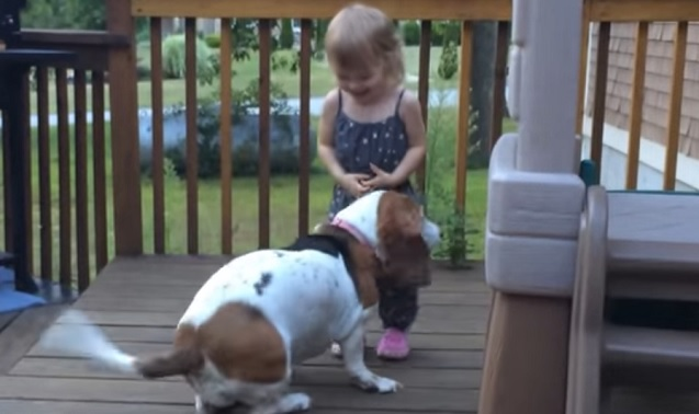 basset-hound-girl-dog-play