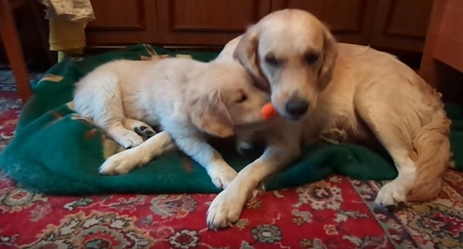 cute-and-playful-dogs