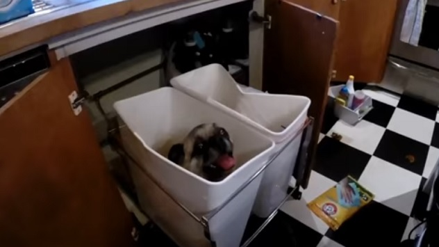 cute-pug-kitchen-dog