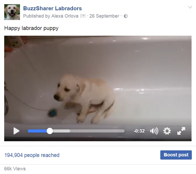 labrador-puppy-bath-dog