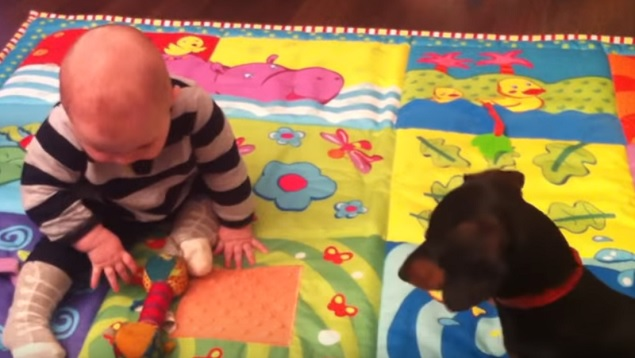 cute-baby-child-dog-dachshund-playing
