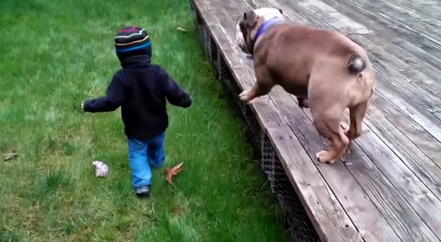 kid-english-bulldog-fun-game