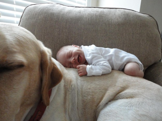 labrador and tiny child