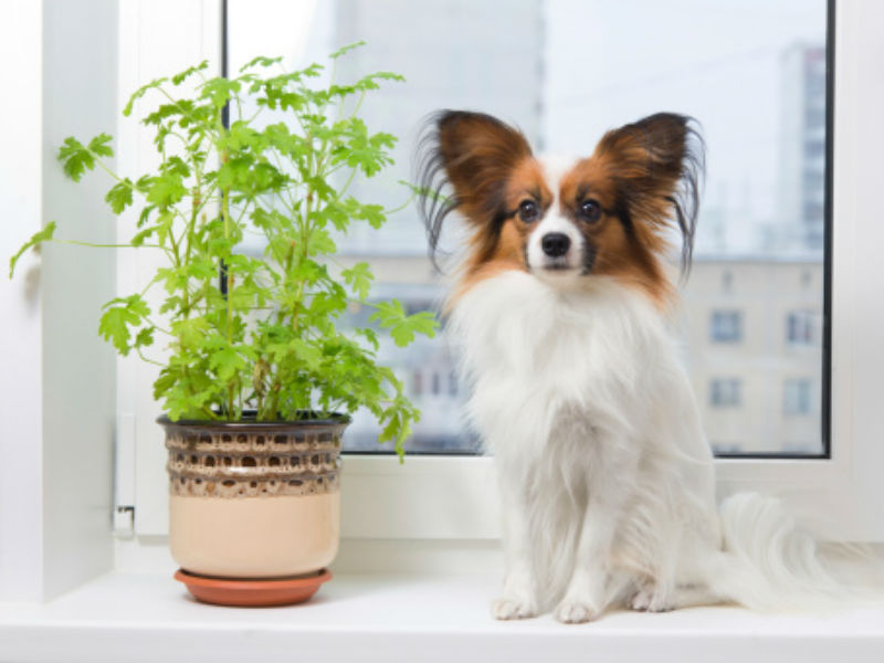 8 Houseplants That Could Harm You and Your Pets