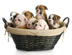 5 Things to Consider When Choosing the Right Dog Food For Your Puppy
