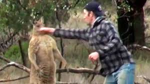 Man,  Tonkins, punches a kangaroo in the face to rescue his dog