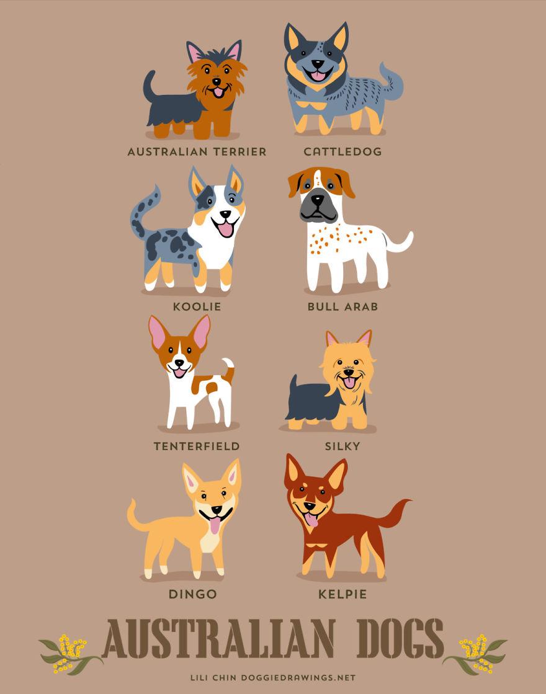 Australian dogs