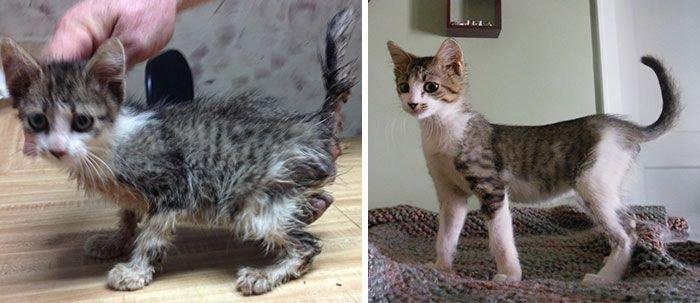 Cat photo pet 5