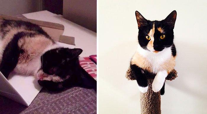 Cat photo pet 9