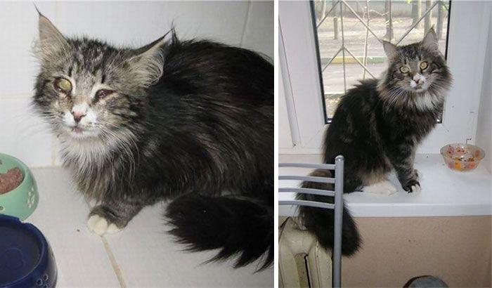 Cat photo pet photography 1