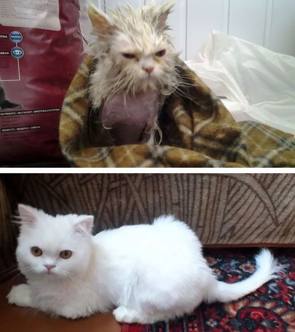 Cat photo pet photography 4