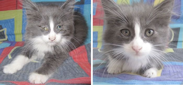 Cat photo pet photography 6