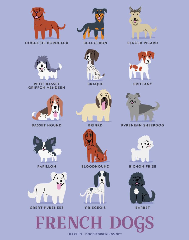 Scottish Dog Breeds List