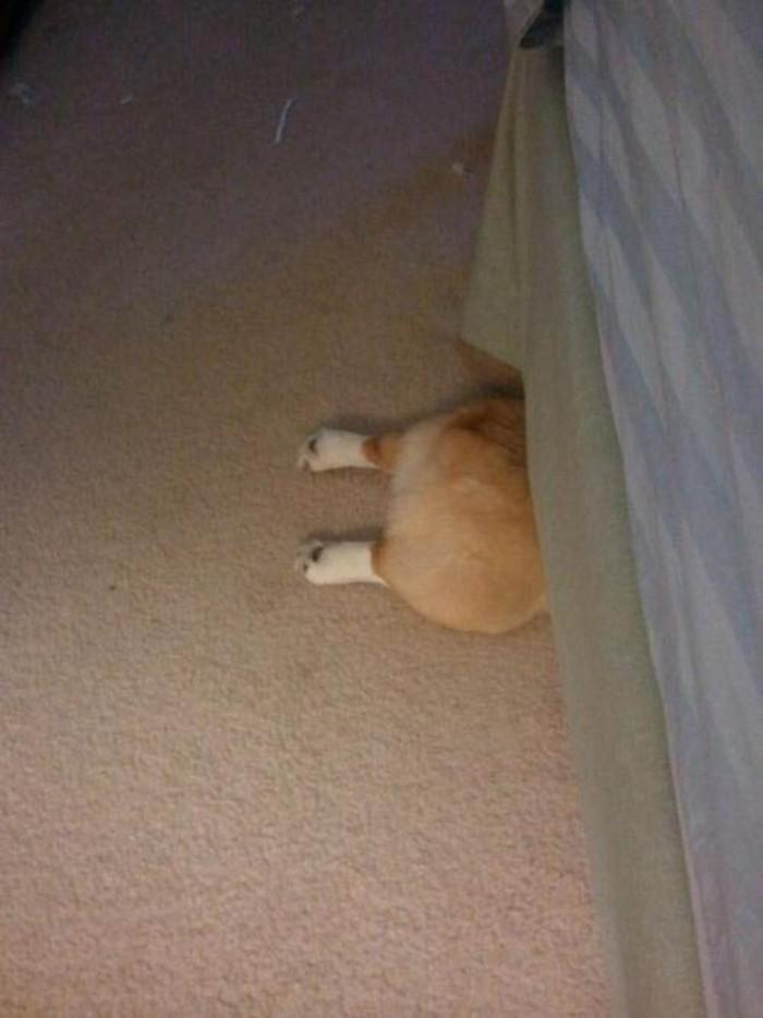 awesome dog hiding
